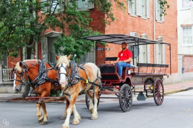 Savannah_horse and carriage