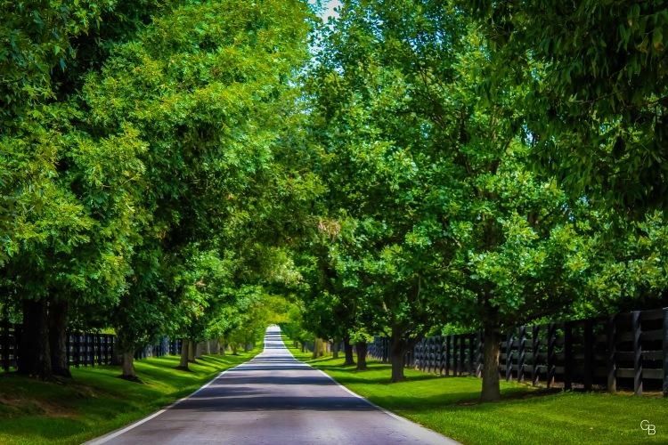 Steele Road_Versailles KY