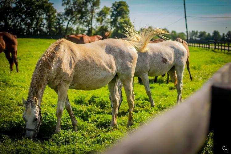 Yarnallton Pike horses